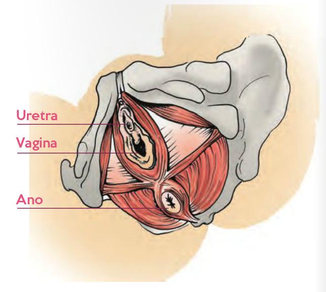 cos'è il perineo